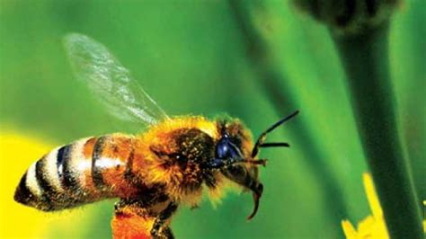 Are Bees Attracted To Light by Are Bees Attracted To Certain Colours News