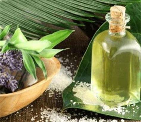 Daun Minyak Kayu Putih 5 khasiat minyak kayu putih selain obati masuk angin