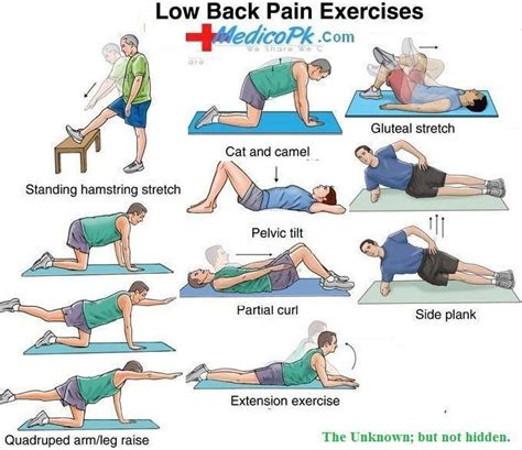 low back exercises exercise