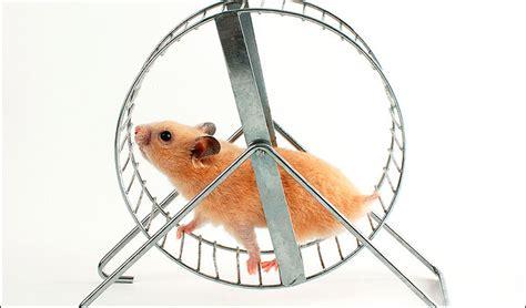 hamster wheel the hamster wheel of