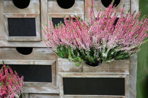 fiori invernali da vaso esterni piante e fiori invernali donnad
