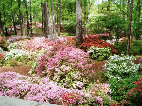 Callaway Gardens by Get Ideas From Local Gardens