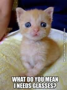 Funny cross eyed cats