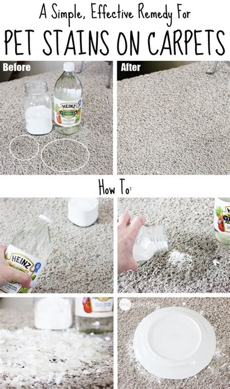 Rug Stain Removal by How To Remove Pet Stains On Carpets How To