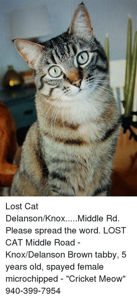 Lost Cat Meme - lost cat delansonknoxmiddle rd please spread the word lost