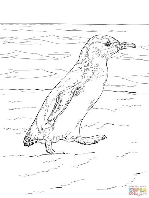 humboldt penguin coloring page image gallery humboldt penguin coloring pages