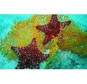 Star Fish HD Wallpapers