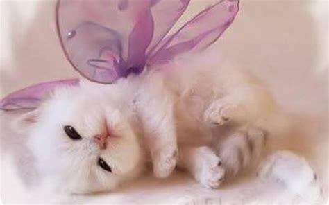 kittens images cute kitten wallpaper hd wallpaper and background photos 16094693