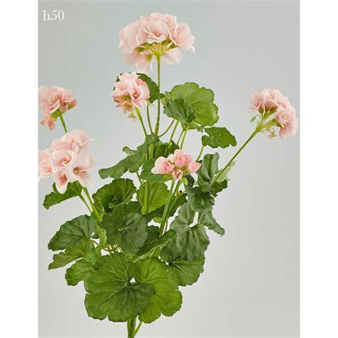 geranio fiore geranio edg rosa cespuglio con 6 fiori fiori profumi