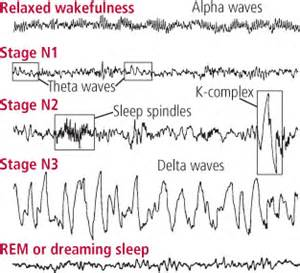 Waves By Sleeper by Article From Harvard Helpguide On Resetting Your
