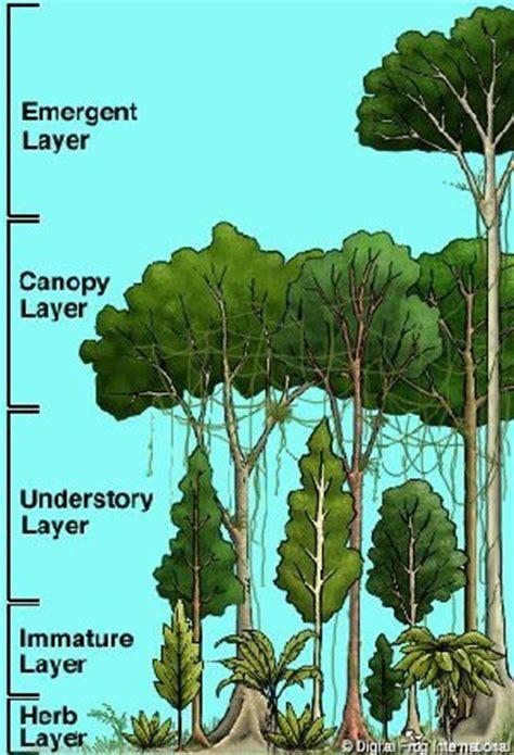 pisos la selva del c piso altitudinal montano bosque selva pluvial montana