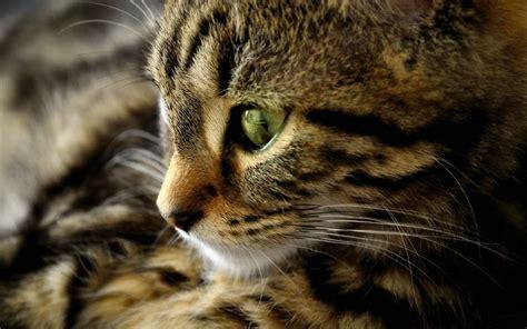 nice cats wallpaper kucing