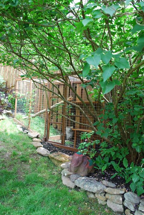 backyard cat enclosure diy outdoor cat enclosures crazy pet people pinterest