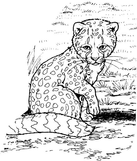 african cats coloring pages free cheetah coloring pages