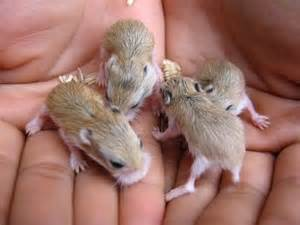 baby hamster a cute a day