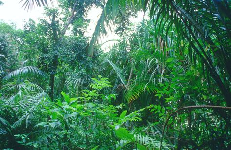 tropical forest plants world visits tropical rainforests green plants on the earth