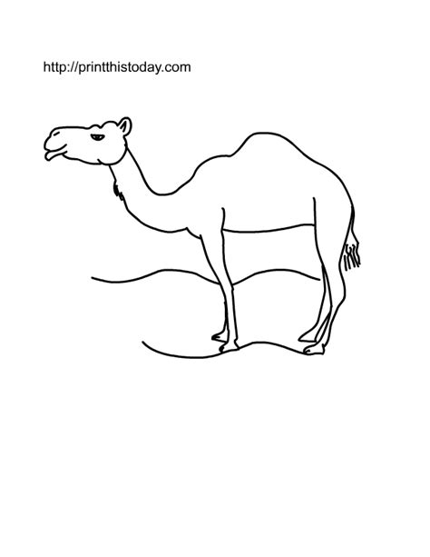 printable desert animal pictures free printable wild animals coloring pages 1