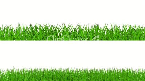 growing green grass royalty  video  stock footage
