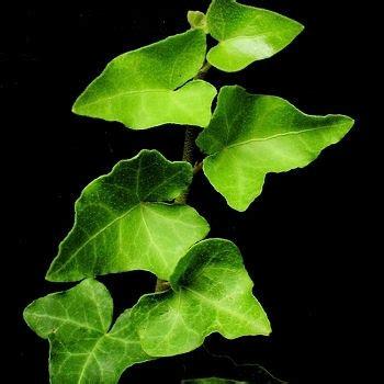 jardin gt plantes d int 233 rieur gt plantes d 233 polluantes