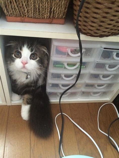 cute  cat  loves playing hide   seek