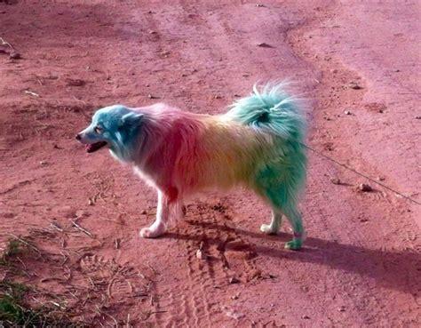 rainbow dogs rainbow rainbow animals dogs pets rainbows rainbow animals