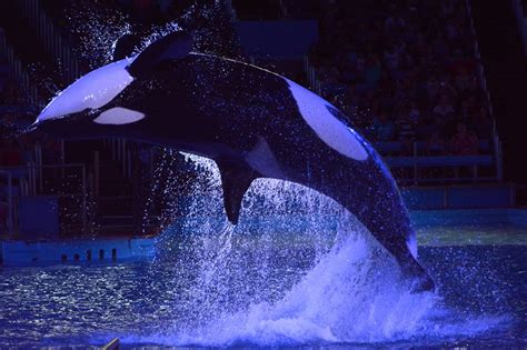 seaworld light up the light up the at seaworld marine mammal trainer
