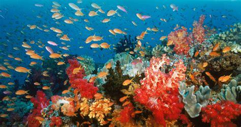 maria callas kinodvor koralni grebeni kinodvor