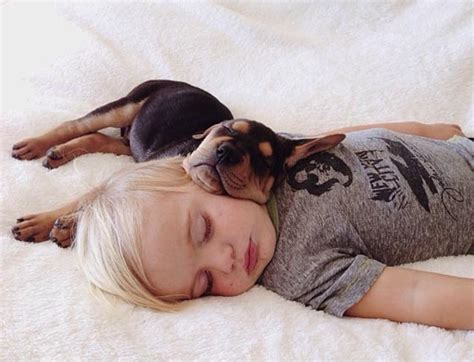 puppy sleeping with baby adorable photos sleeping baby and puppy design swan