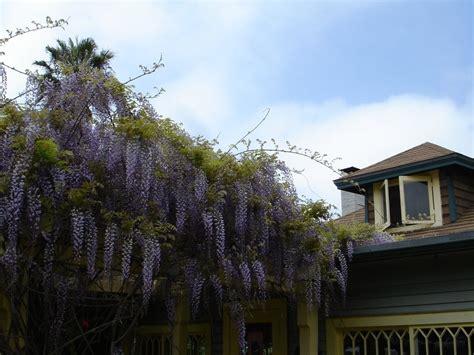 la jolla cottages wisteria cottage landmarks historical buildings 780