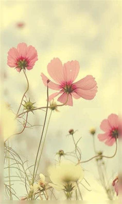imagenes de flores wallpaper hd fondos wallpaper de flores para tel 233 fonos m 243 viles