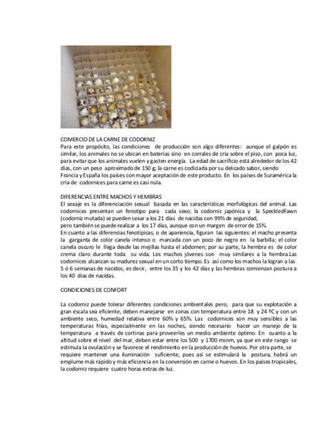 la pequea filosofa de 8426401805 informe de la visita a la avicola la peque 241 a codorniz