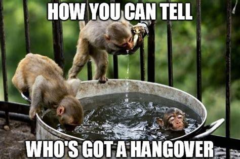 hangover meme bad hangover photos and funny hangover memes