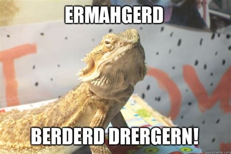 Bearded Dragon Meme - bearded dragons funny quotes quotesgram