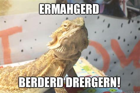 Bearded Dragon Meme - i m upset it s your fault bearded dragon blames you