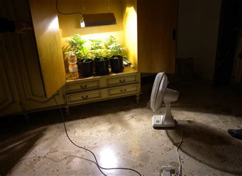 coltivazione indoor armadio arrestato per 171 serra casalinga 187 coltiva cannabis in armadio