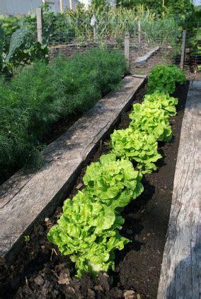 Vegetable Garden Soil Composition Building Healthy And Garden Soil On