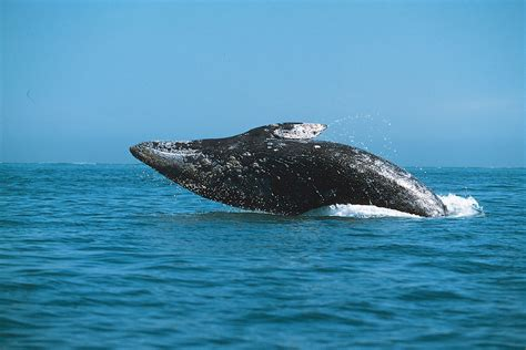 the endangered organisms of the sea endangered species of