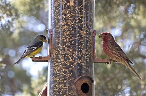 feeding wild birds what ejse besides seed bird seed savings in novemberwells brothers pet lawn garden supply