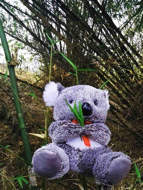 Bonrka Koala jual boneka koala murah harga boneka koala