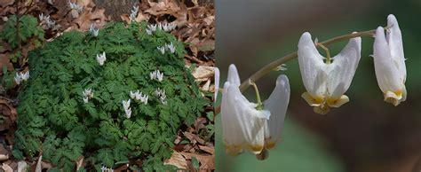 liliaceae  michigan nature guys blog