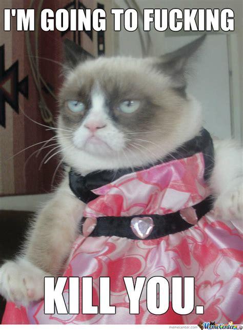 Halloween Cat Meme - best funny viral memes archives slapwank