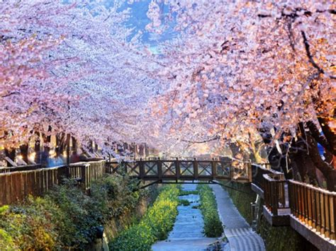 korea is best korea best time to visit south korea on the go tours