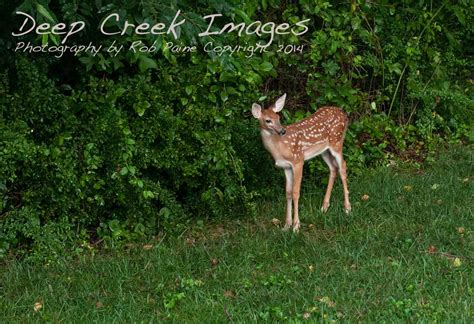 What To Feed Deer In Backyard Outdoor Goods Gogo Papa What To Feed Deer In Backyard