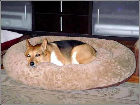 costco dog house wood costco round dog bed top costco round dog bed with costco