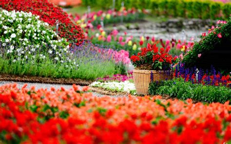 garden of flowers flower garden wallpapers best wallpapers