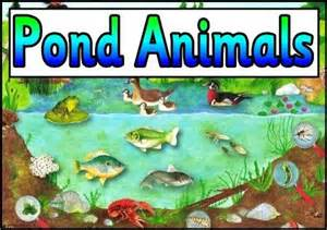 ks1 and ks2 science teaching resources posters for