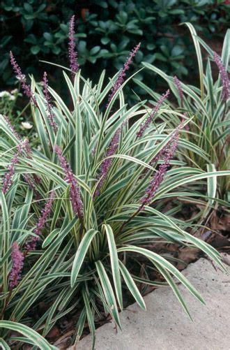 sun l for plants best 20 full sun plants ideas on pinterest full sun