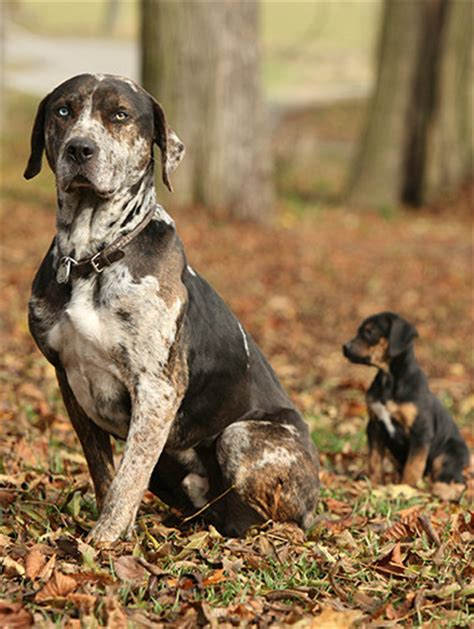 how to introduce a puppy to another introducing your to other pets advice purina