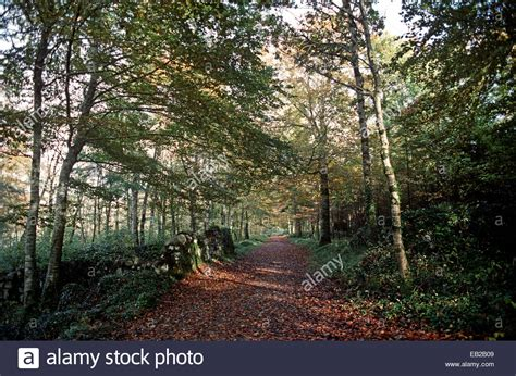 butlers we buy houses the seven woods coole park from william butler yeats poem in the stock photo