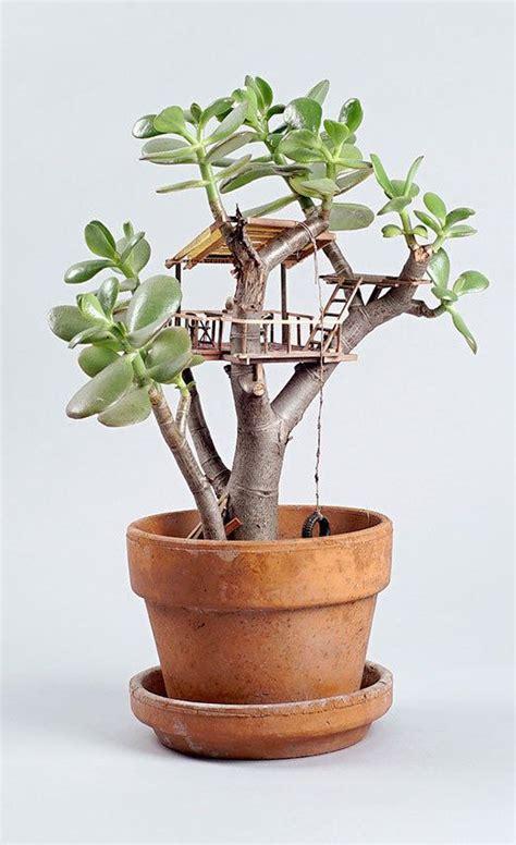 miniature tree houses  plants  perfect home
